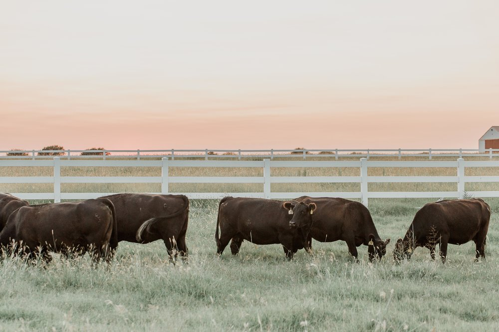 oklahoma natural beef certified natural 580 beef