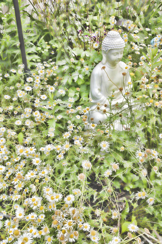 _DSC0540 janine's garden Buddha 10 x 15 v.jpg