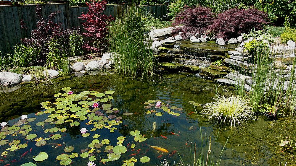 P1420475 land pond 2.jpg