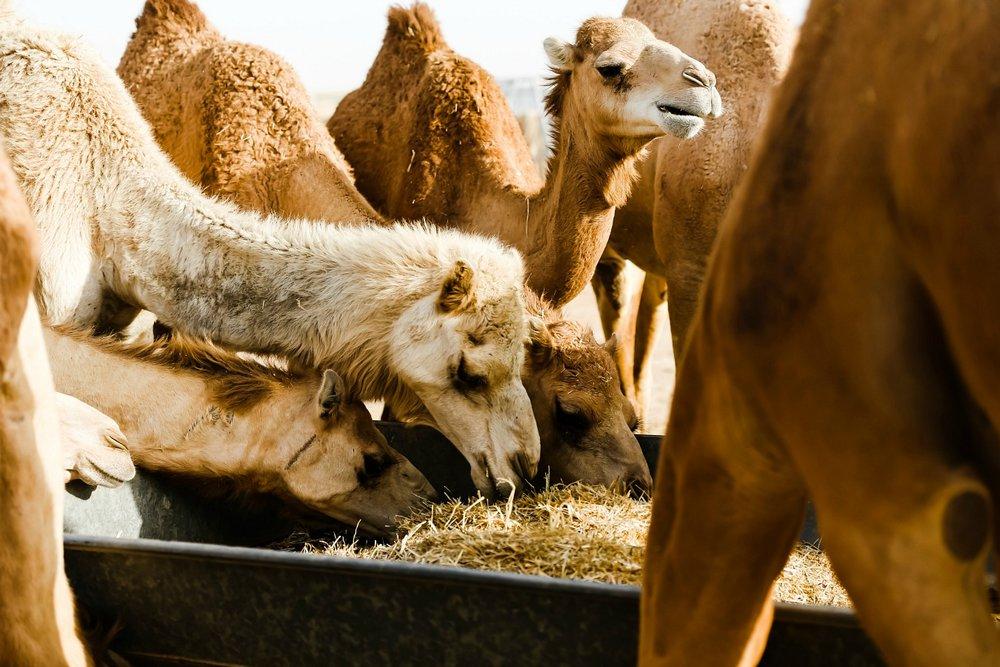 Desert Safari Trip in Abu Dhabi & Dubai