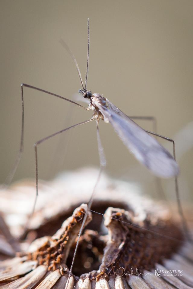 Studying bugs