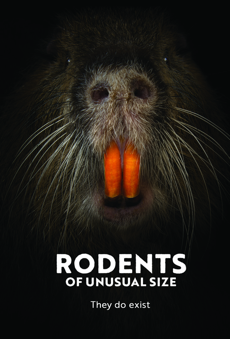 RODENTS OF AN UNUSUAL SIZE - The residents of Louisiana never know what will attack them next: floods, hurricanes, even monstrous swamp rats. Gigantic orange-toothed nutria are eating up the coastal wetlands, destroying the landscape, and threatening the very existence of the human population. This invasive South American species breeds faster than the roving squads of hunters and trappers can control them. But the people who have lived here for generations are not the type of folks who let their land—and their livelihoods—recede into the Gulf without a fight. Meet fisherman turned bounty hunter Thomas Gonzales and a pack of colorful diehards as they defend their land, culture, and way of life against the unforgiving forces of nature. It is man vs. rodent. May the best mammal win.