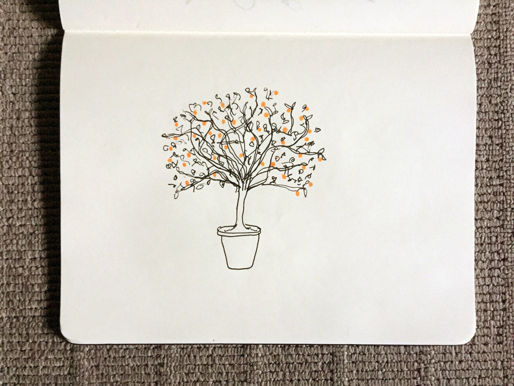 We've got a cumquat tree. Drawing Luke Hockley.