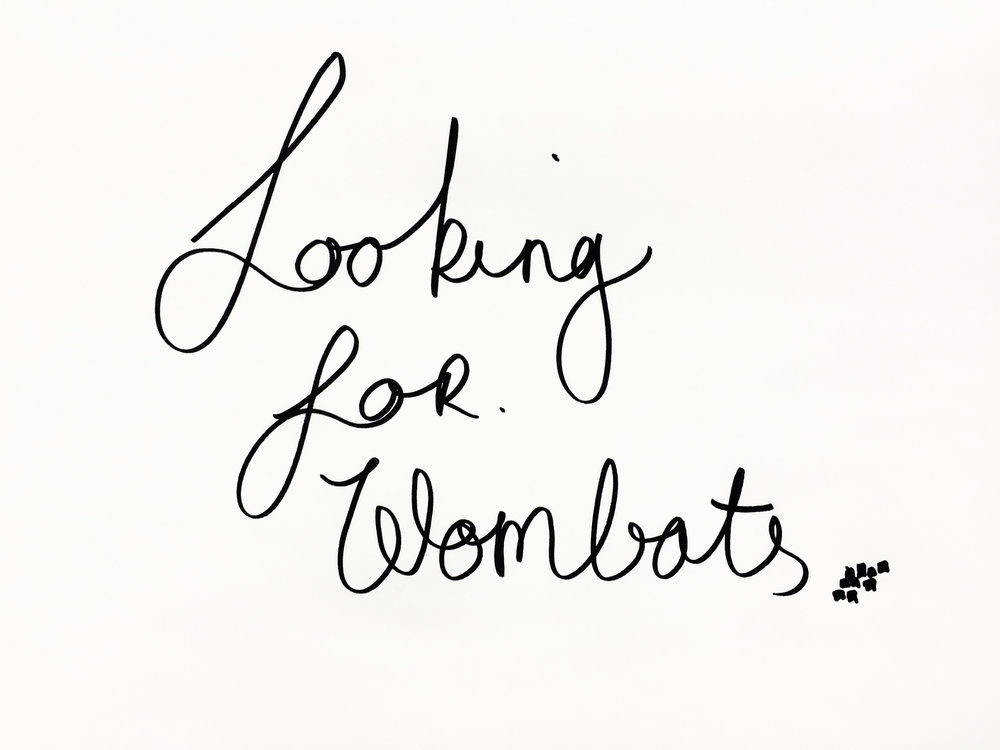 Looking for wombats. Drawing Luke Hockley.