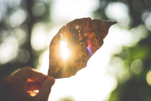 leaf image.jpeg