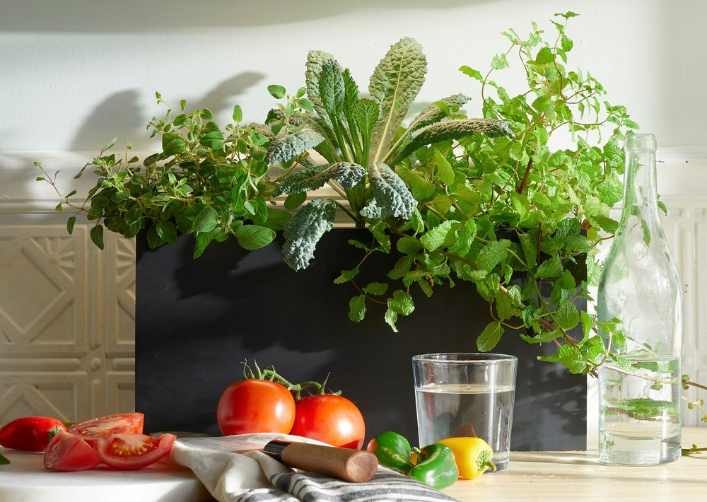 Grow herbs or other leafy greens indoors under a Growbar LED light fixture or near a sunny window. Photo courtesy of Modern Sprout