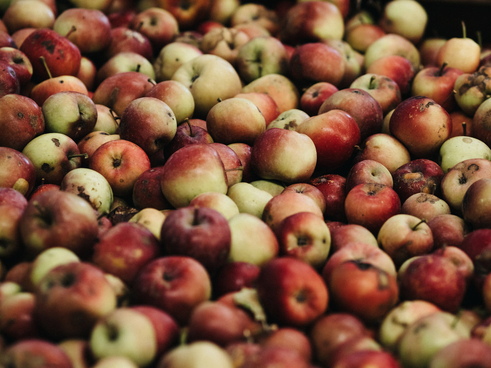 Blemished, but perfect apples from Mock Orchards in Red Hill, Victoria