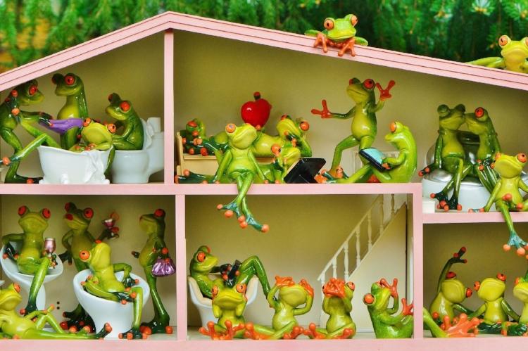 frogs-residents.jpg