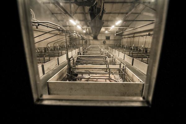 pig intensive farm-10.jpg