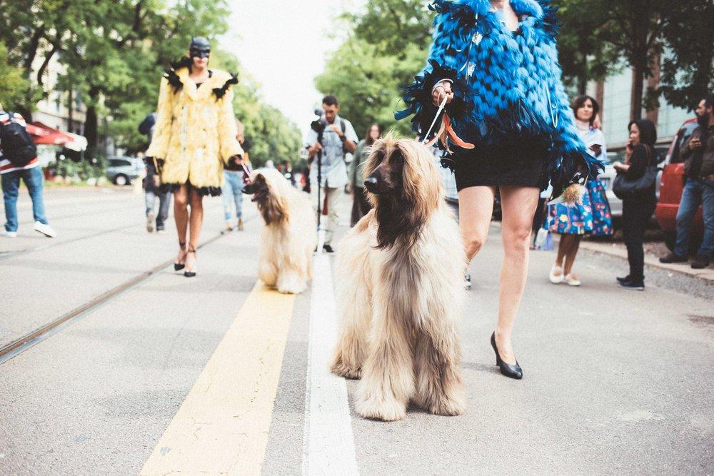 19_22-09-16 settimana della moda milano-826.jpg