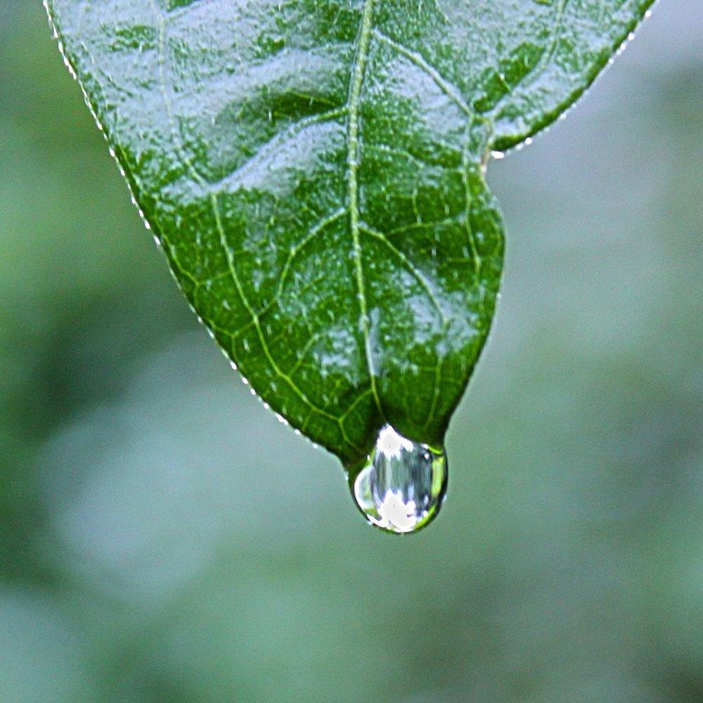 leaf-rain.jpg