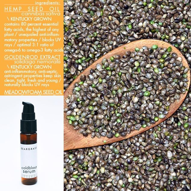 need some healing vibes after sun overexposure? introducing local ingredient no1: hempseed oil. infused with healing calendula. also locally grown. . . . #skincare #hemp #kentuckyproud #nature #hempseed #omega #sensual #healing #beargrass #greenbeauty #menswear #grooming #beauty #cleanbeauty #naturalhealing #homeopathic #kentuckyfarms #kentucky