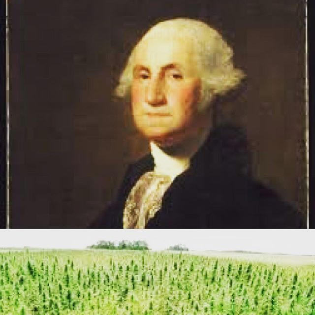 Happy Presidents' day! In honor of George Washington, a hemp farmer! We're happy to use hemp seed oil in our serum! . . . . #hemp #hempseedoil #cannabis #skincare #naturalbeauty #naturalgrooming #unisex #organicskincare #indiebeauty #grooming #smallbatch #handcrafted #beauty #clean #beargrass #cleanbeauty #buylocal #eco #veganskincare #vegan #louisville #kentuckyproud #bcorp #sustainable