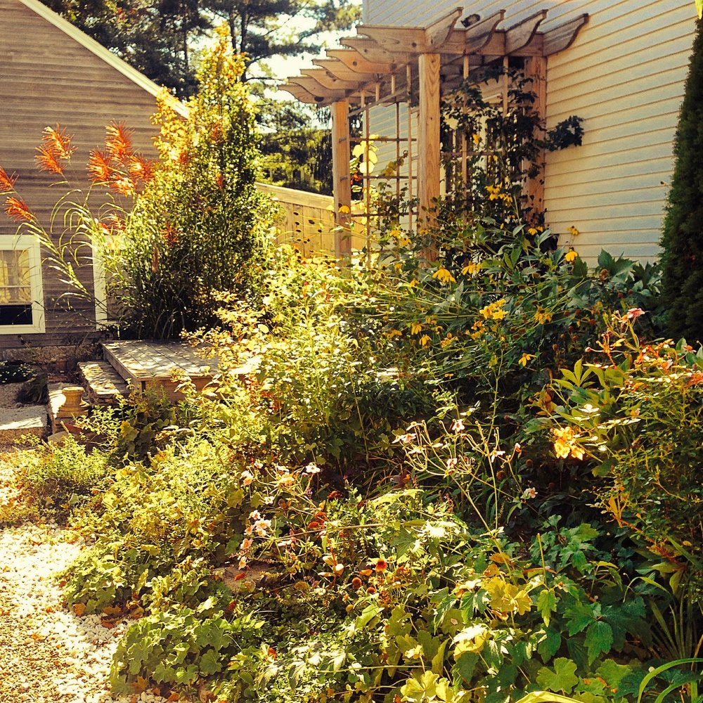 A RIOT OF WARMTH IN THIS MAINE PERENNIAL BORDER