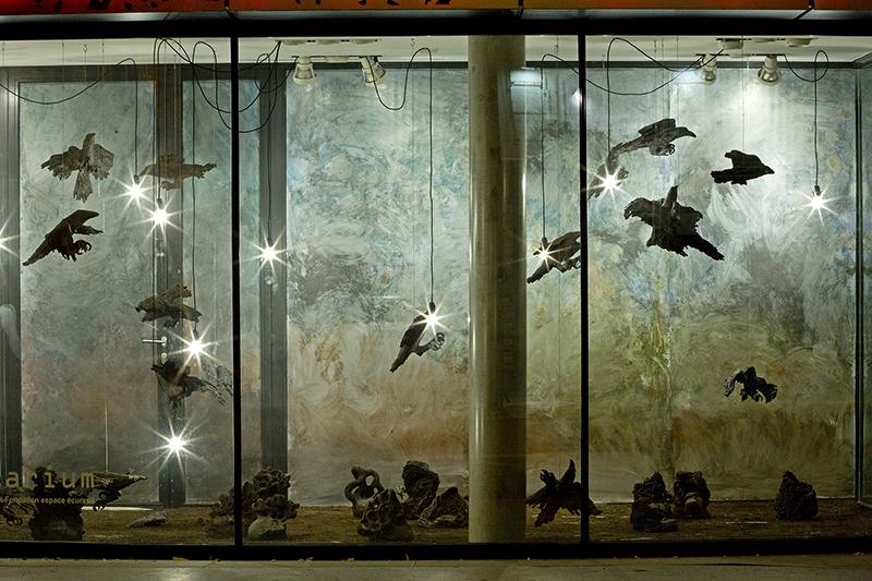 Aquarium Toulouse 3(bd).jpg