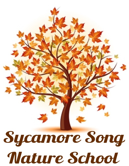 Sycamore Song Nature School