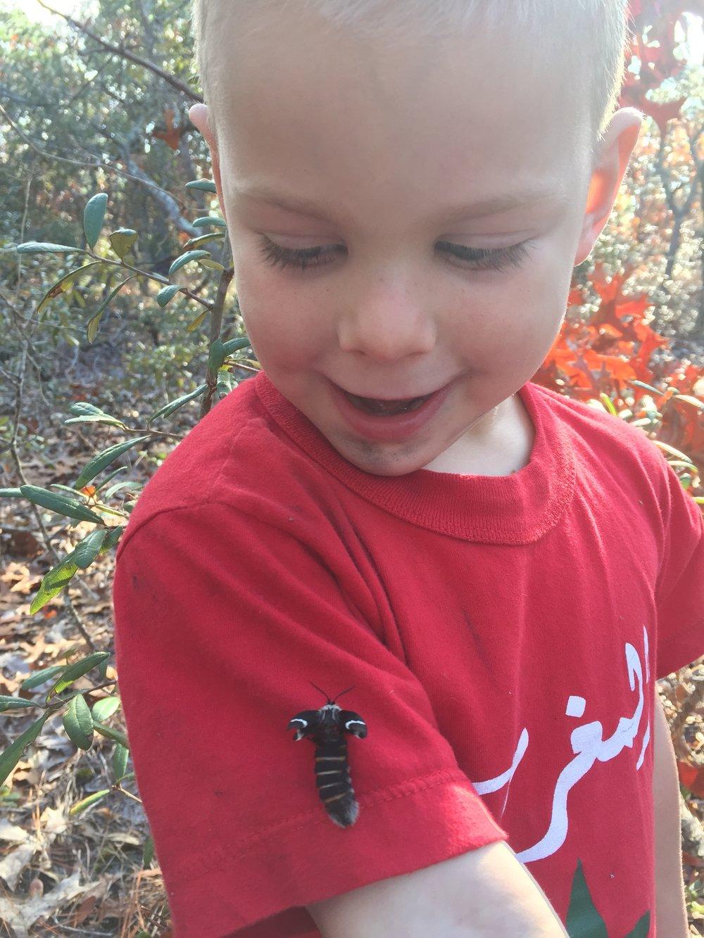 Newly emerged female Buck Moth
