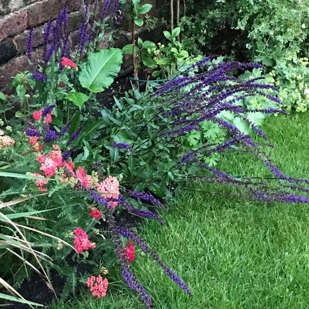greenwich planting -