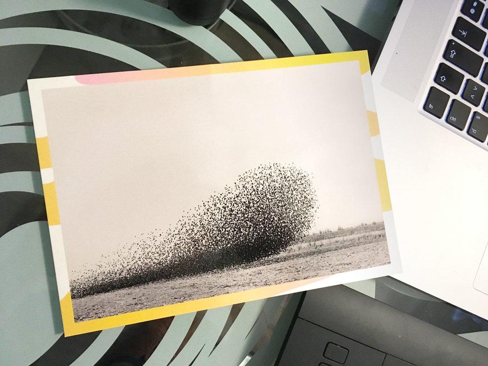 Sur le carton de l'exposition une oeuvre de  Lukas Felzmann