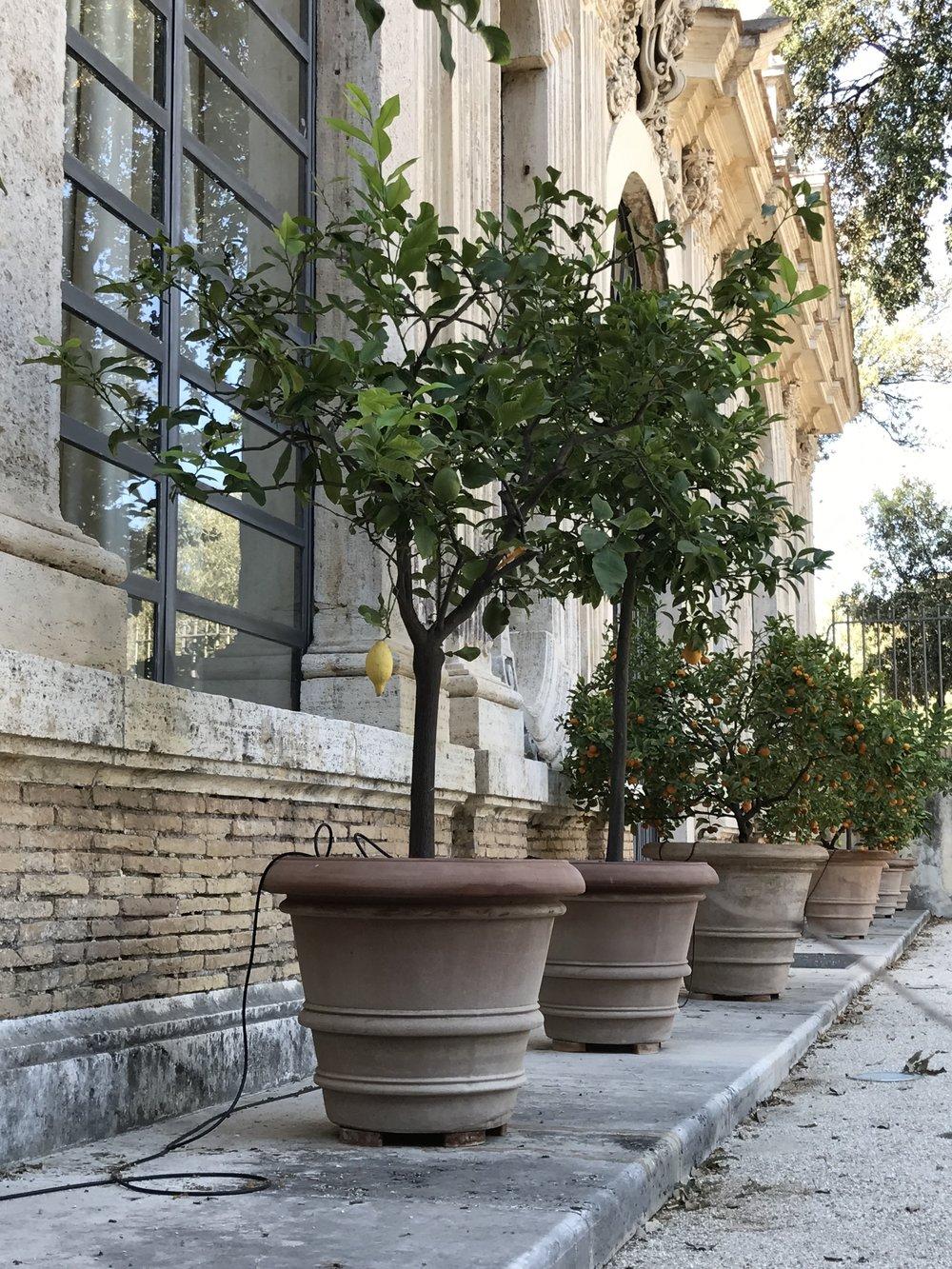 Limão siciliano em Roma