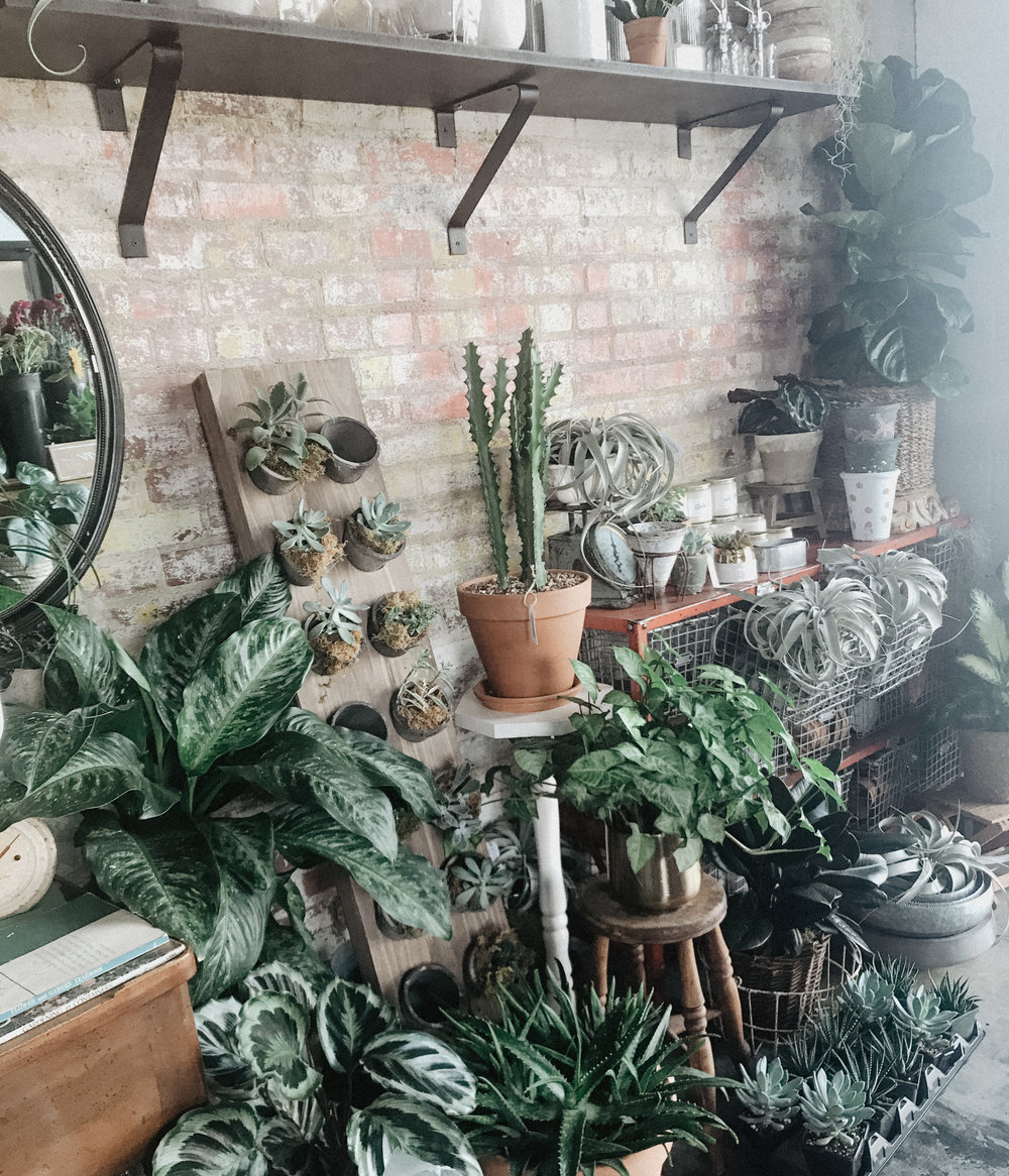 Sadly these photos were not taken in my home. I do not have this glorious amount of plants, nor do I have the killer brick wall behind them.