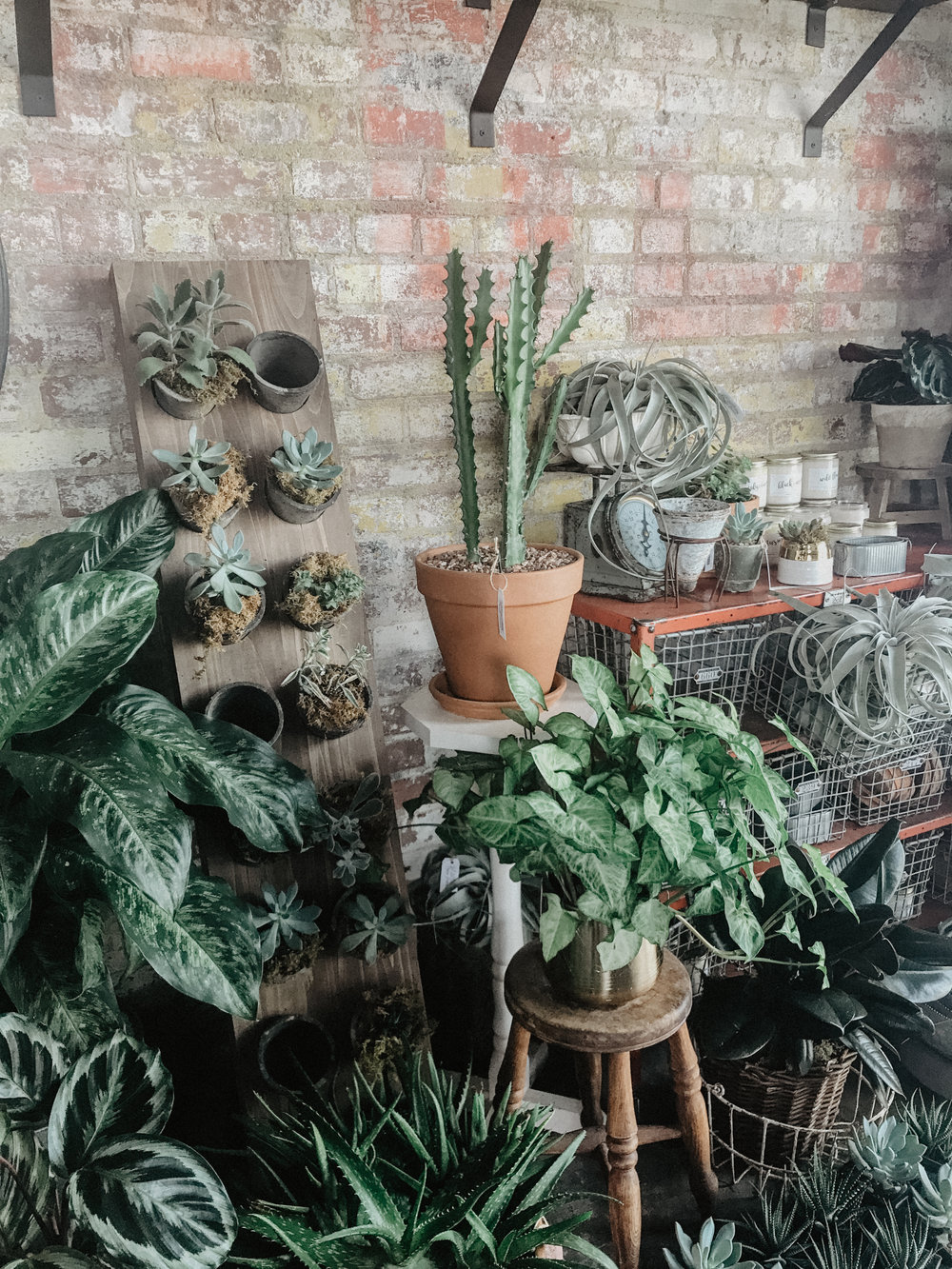 Although I don't have my house completely put together (as you will read below) I did feel like you deserved some sort of imagery from an aesthetic source, so I thought my typical plant shoppe,   Poppy's Garden  , would be just the place!