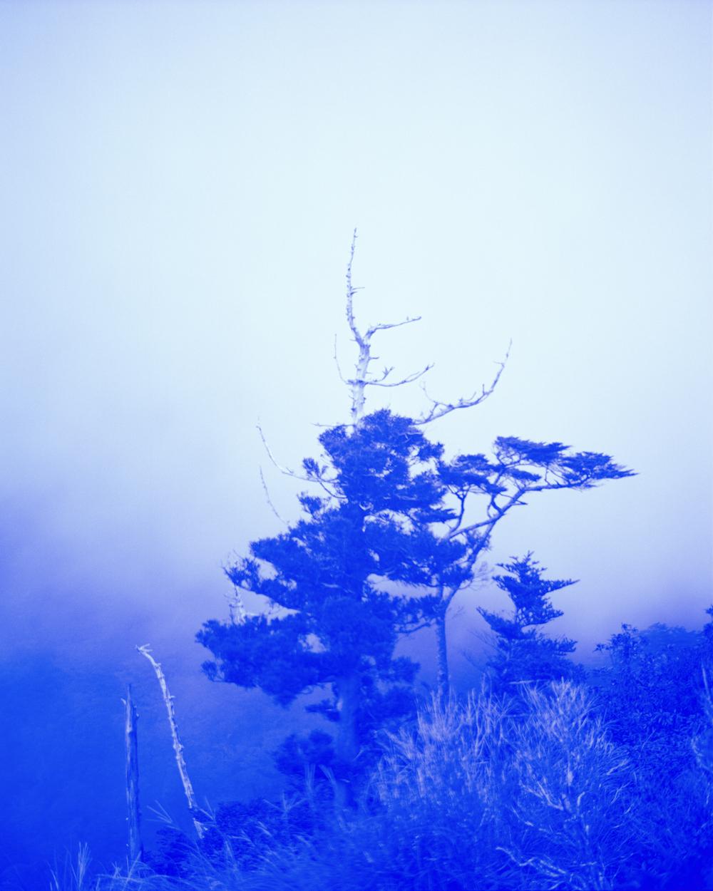 Blue Tree, 2017