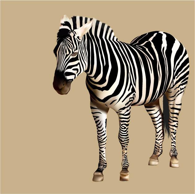 DanielK_W3_Zebra.jpg