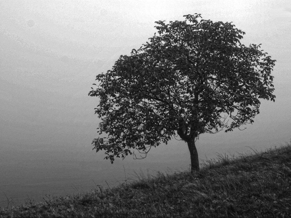 powelllandscape4lrBW.jpg