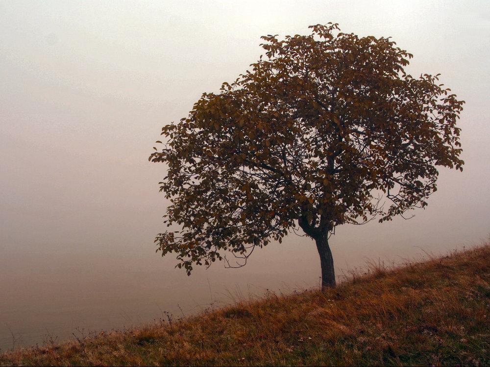 powelllandscape4lr.jpg
