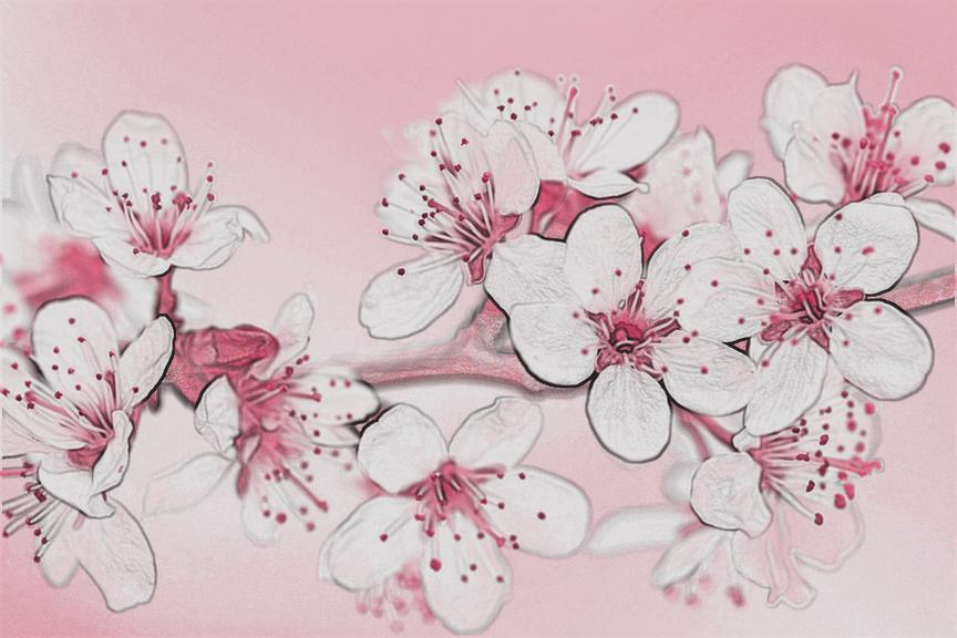 tpowell sketch2 cherry.jpg