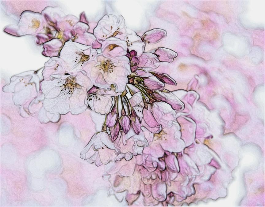 tpowell sketch3 cherry.jpg