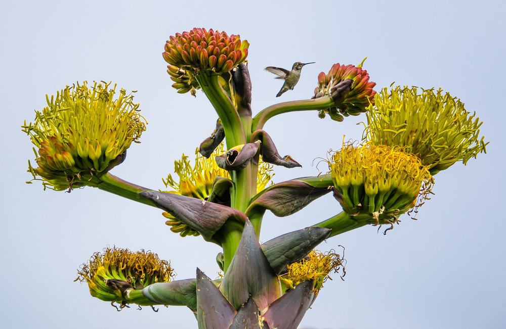 humming-bird-flowers-twit.jpg