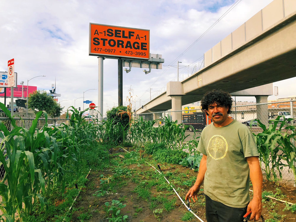 urbangarden3.jpg