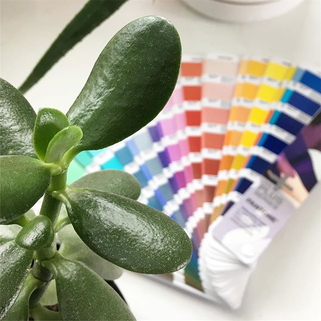 This picture means so much to me - it means that after years of hobby-ing along with graphic design, not having the tools I needed to take it to the next level, now, finally, I am investing in what I love.  Helllooo Pantone, we are fast friends ❤️💛💚💙💜 -Katie