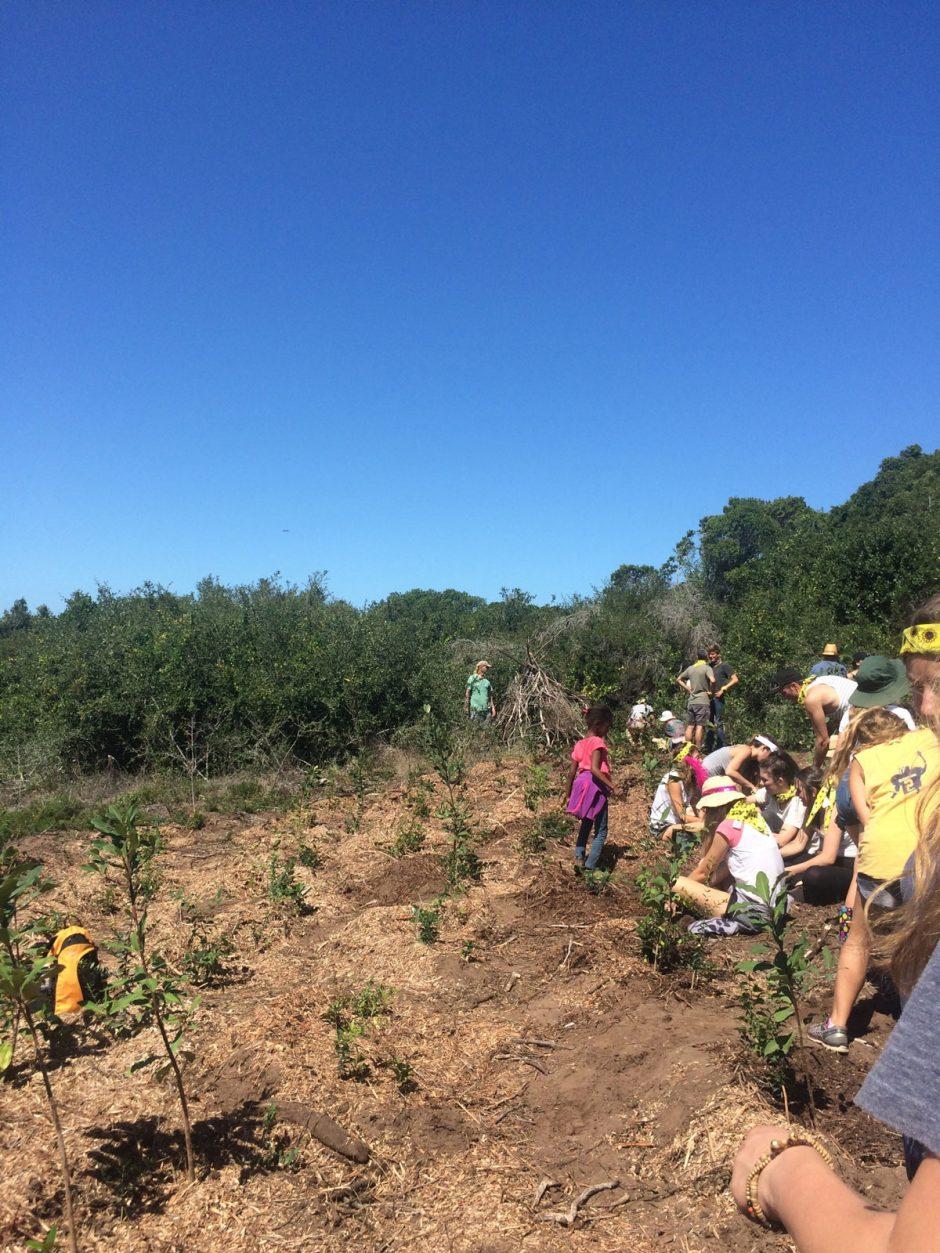The planting ground