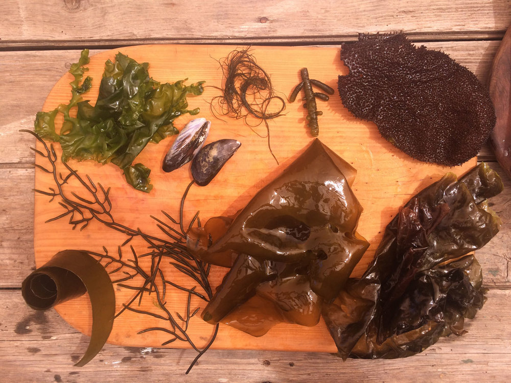 A foraged collection.