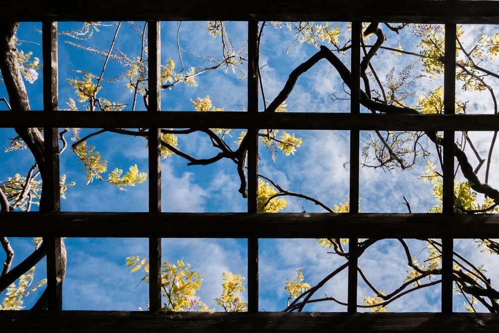flower frame-1.jpg