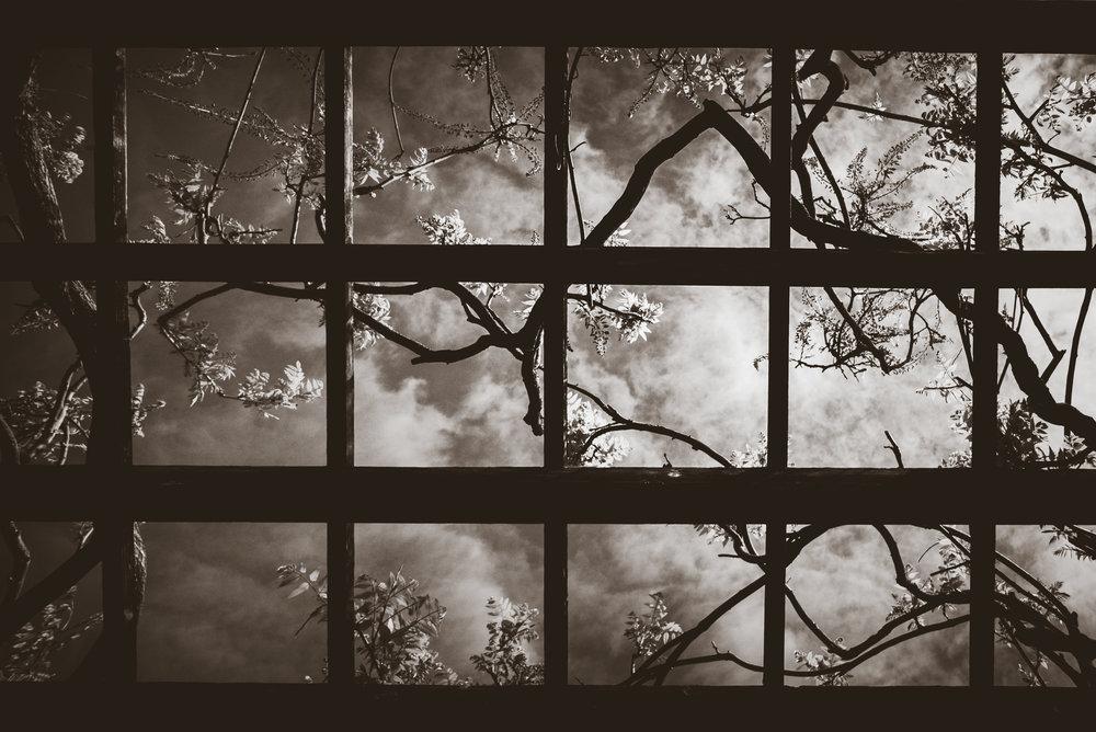 flower frame-2.jpg