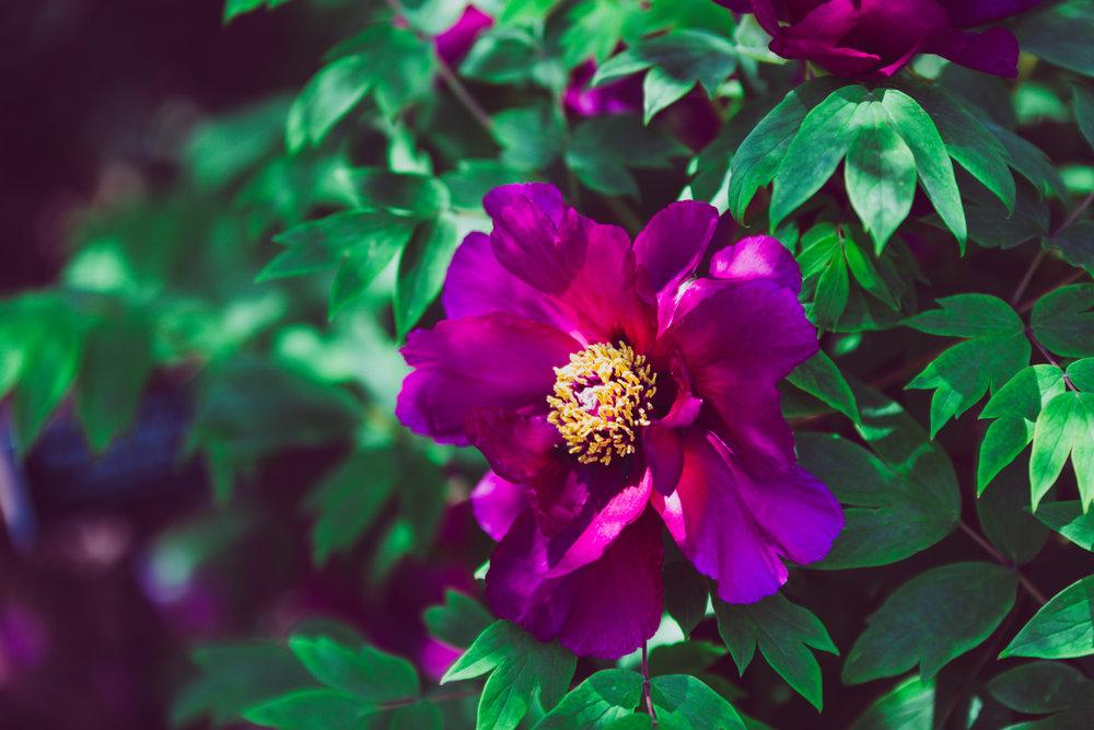 pruple flower.jpg