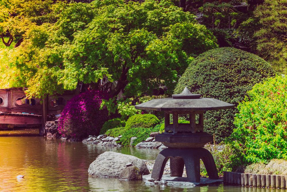 japanese garden 6.jpg