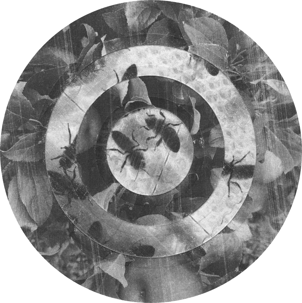 Circles, Apple, Leaves, Bees
