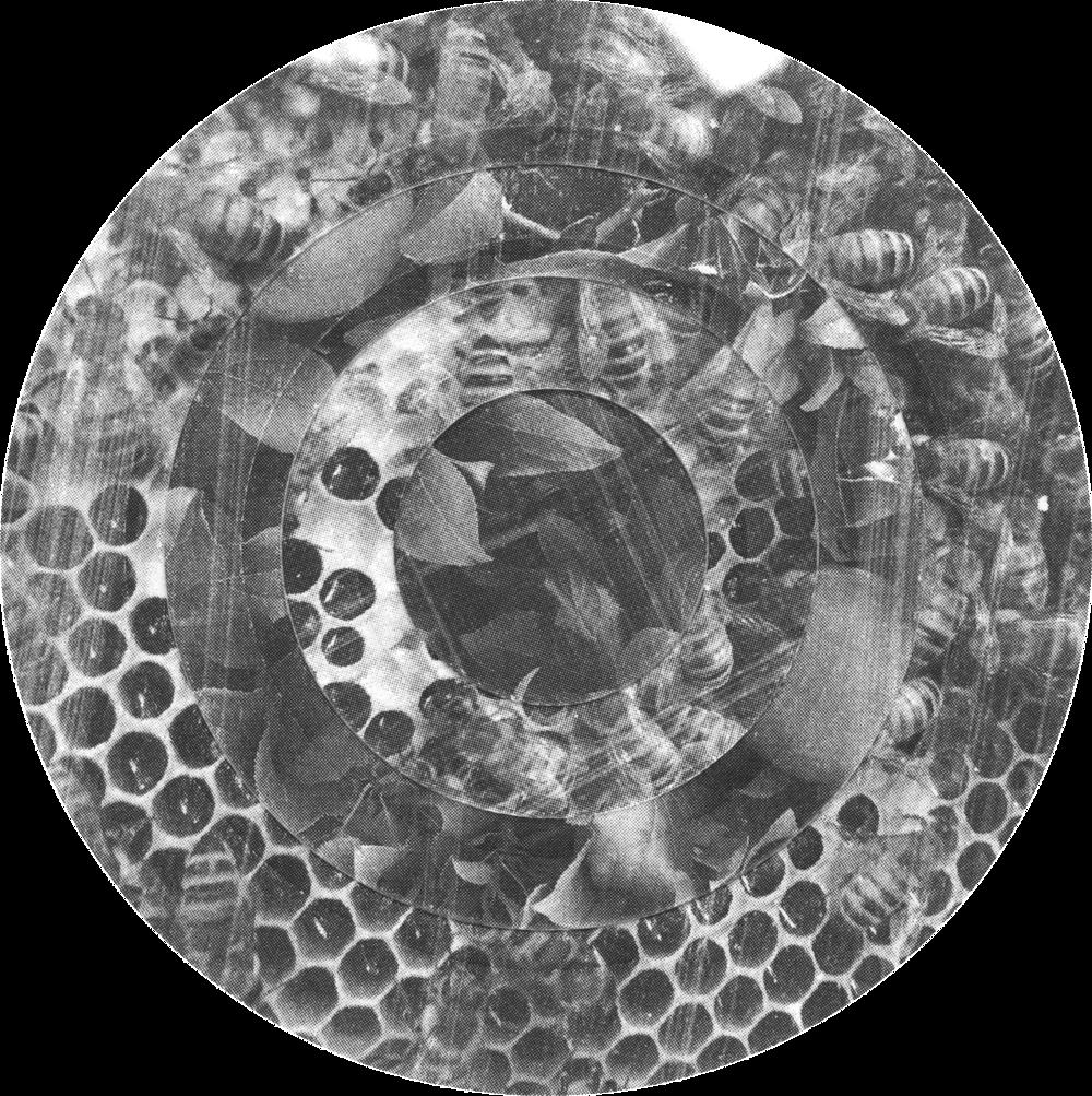Circles, Apple, Leaves, Bees, No. 2