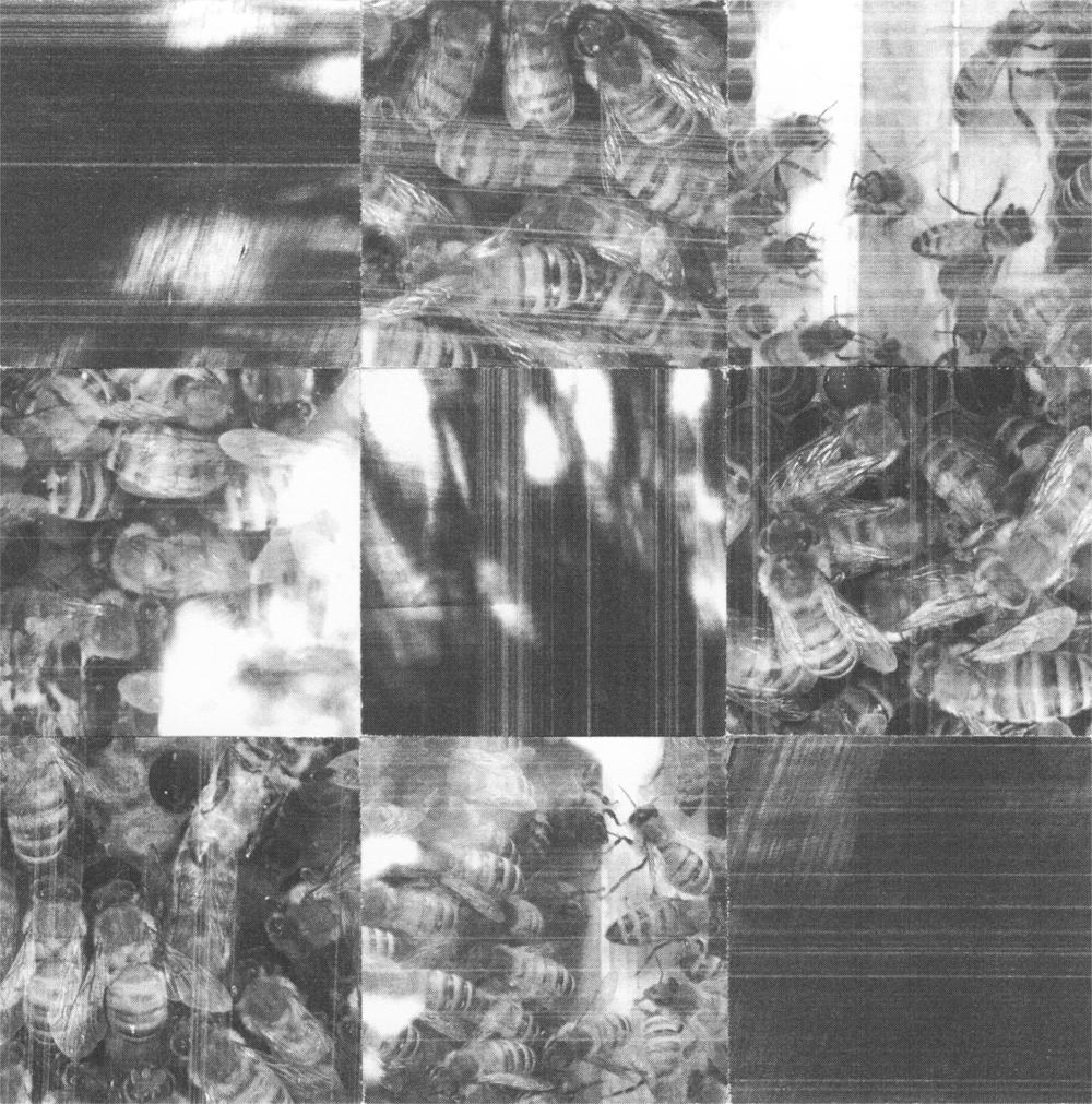 3x3_Sqaure_Bee_Light_Crop&Trim.png