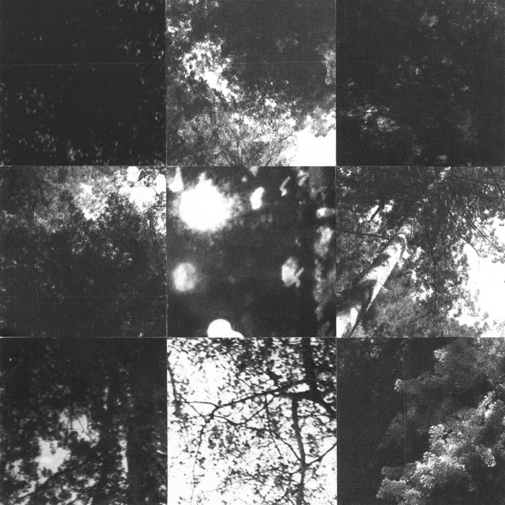 Square_Collages_DappledLight_Crop&Trim.png