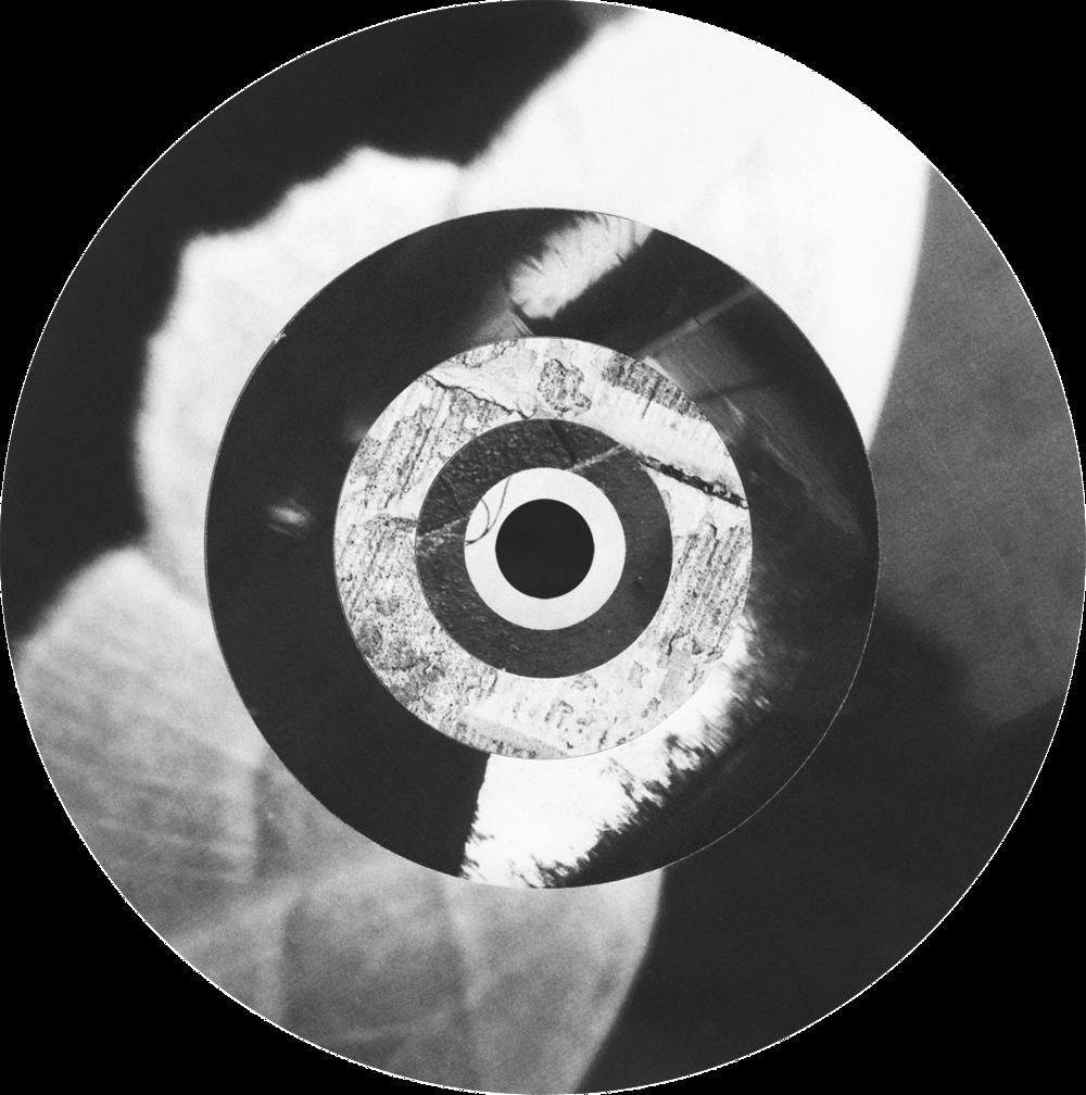 Circle_Collages_MothWings_Crop&Trim.png