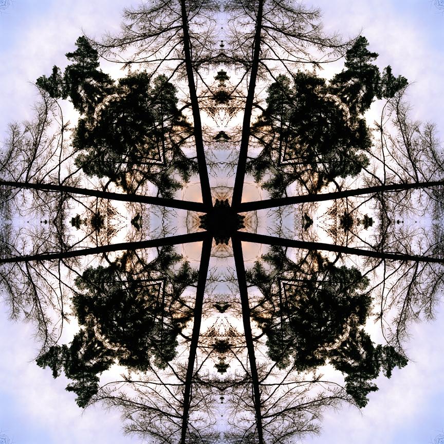 mid_forest_2_print_flat.jpg