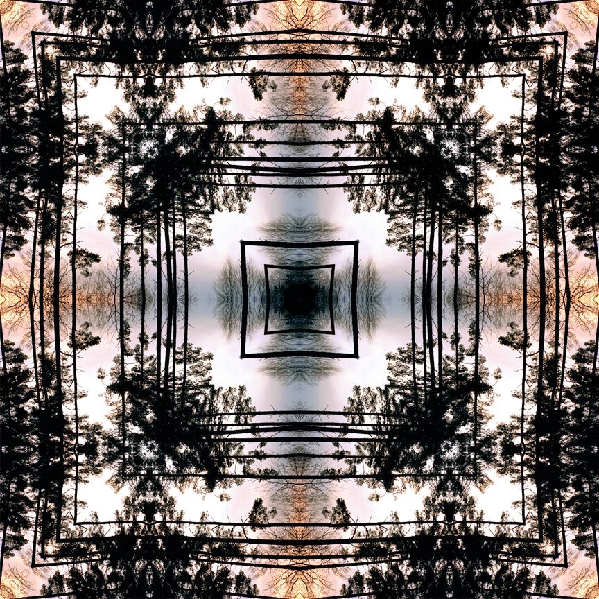 mid_forest_3_print_flat.jpg