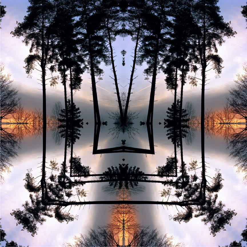 night_forest_1_print_flat.jpg