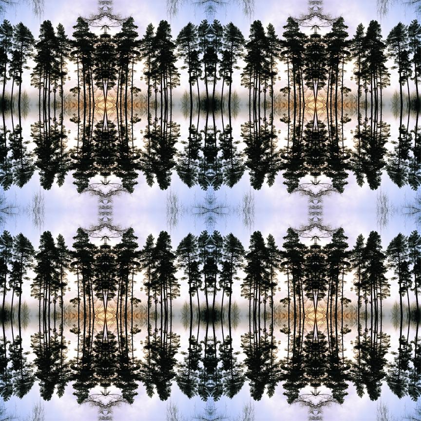 mid_forest_4_print_flat.jpg
